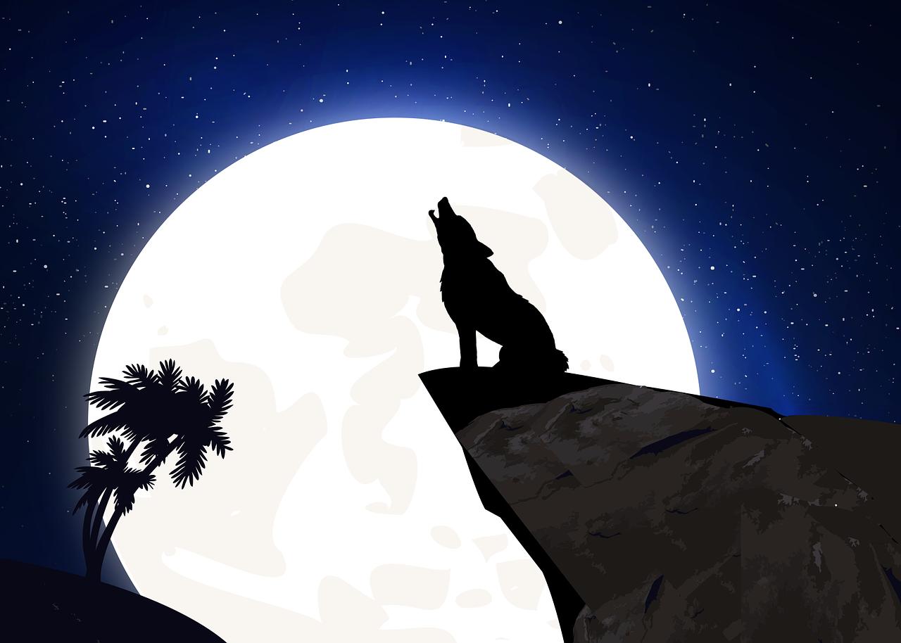 Luna-Nuova Luna Nuova